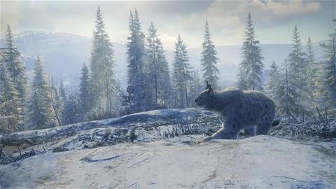 Medved-Taiga