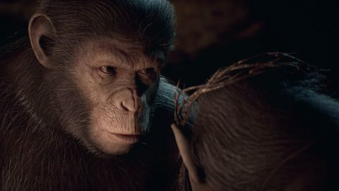 Amour de singe
