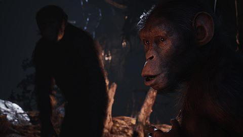 Mon bonobo à moi