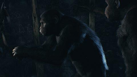 Salut au chimpanzé